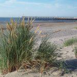Strand_Blankenberge1.jpg